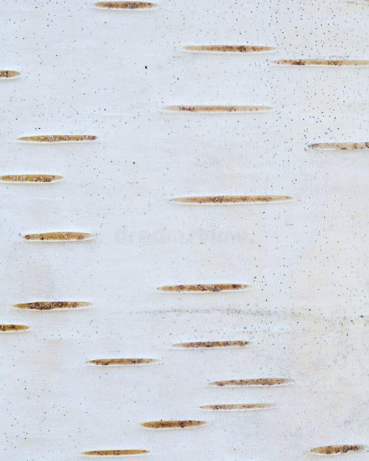 Getrennt auf Weiß lizenzfreie stockbilder