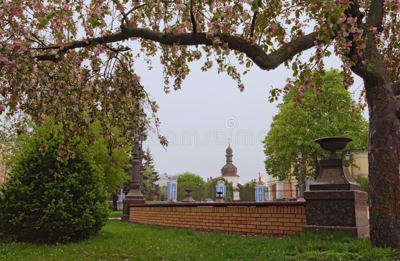 Getrennt auf Wei? Baum in der Blüte im Heiligen Vladimir Hill Weißer alter Glockenturm am Hintergrund Nebeliger Morgen des Fr?hli lizenzfreie stockbilder