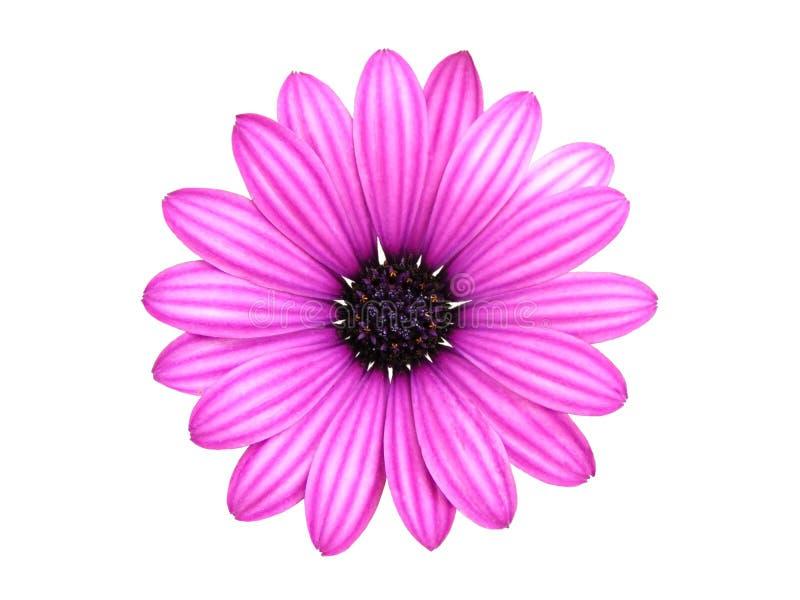 Getrennte Blume lizenzfreies stockfoto