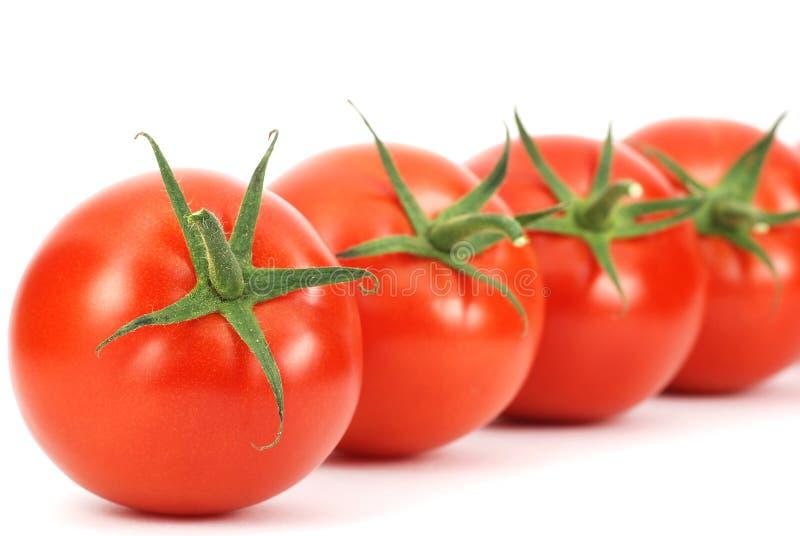 Getrennte neue Tomatezeile Muster lizenzfreie stockfotos