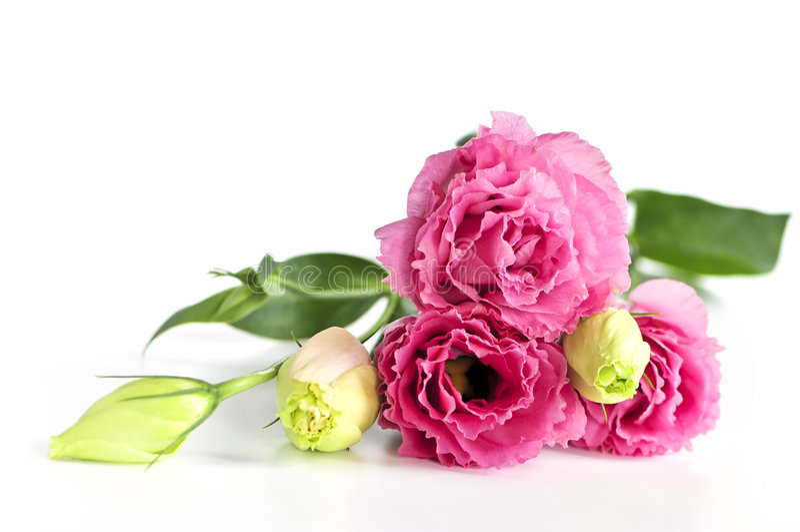 Getrennte rosafarbene Blumen lizenzfreies stockfoto