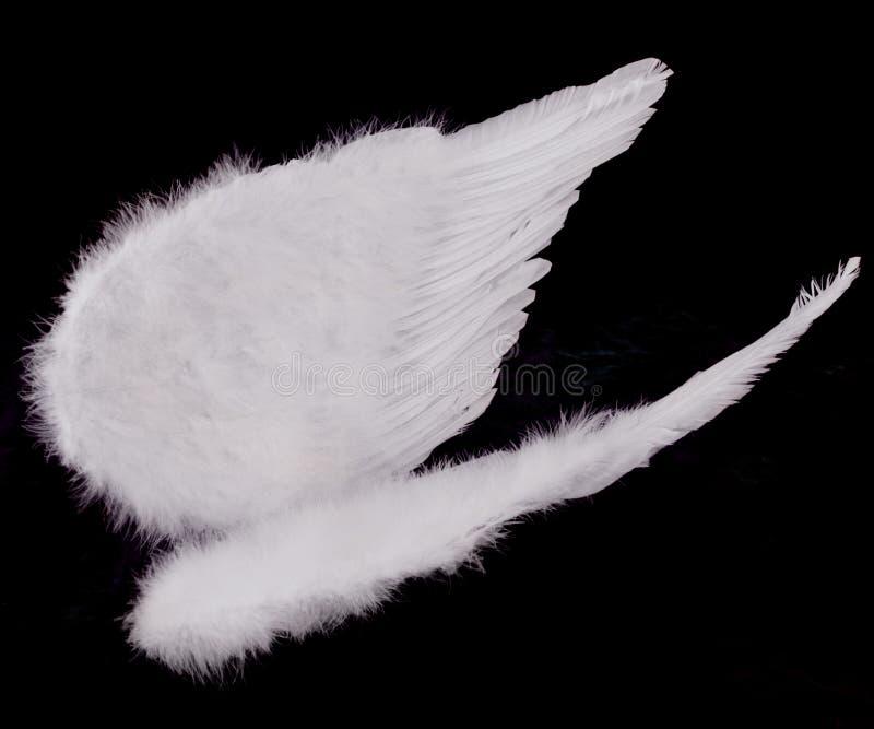 Getrennte Weiße Engels-Flügel Auf Schwarzem Stockbild