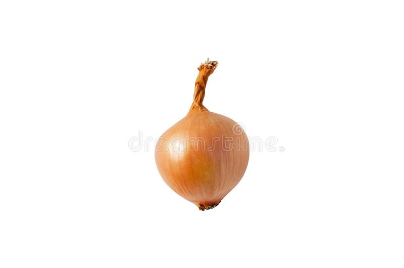 Getrennte Zwiebel Eine Zwiebel lokalisiert auf einem weißen Hintergrund lizenzfreie stockfotografie