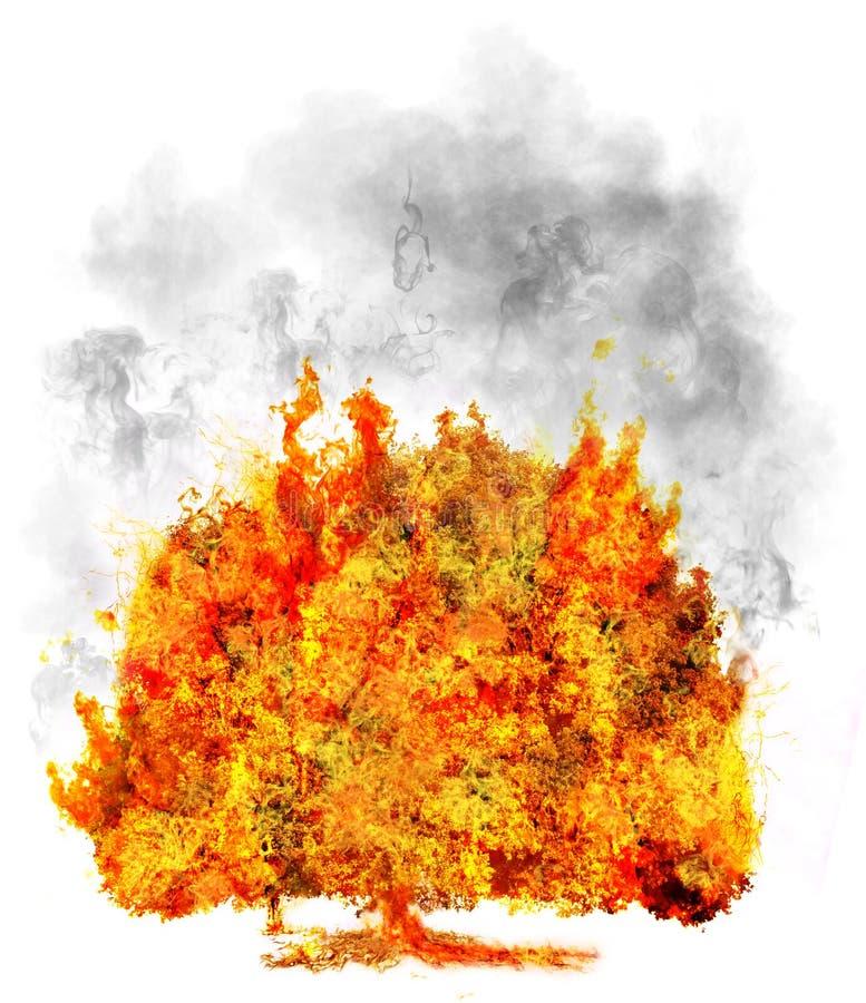 Getrennter Baum im Feuer auf Weiß, Symbol lizenzfreie stockbilder