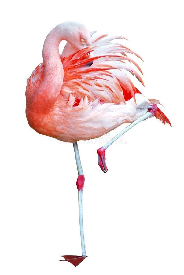 Getrennter Flamingo auf einem Fahrwerkbein