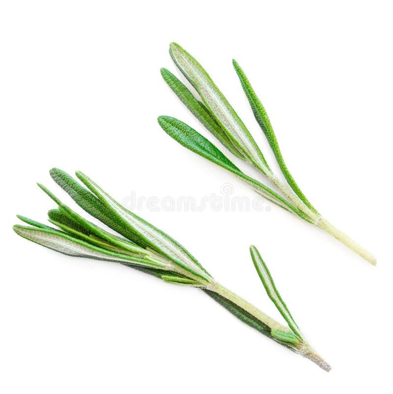 Getrenntes Rosmarinkraut Neues grünes Rosmarinbündel auf einem weißen Ba lizenzfreie stockbilder