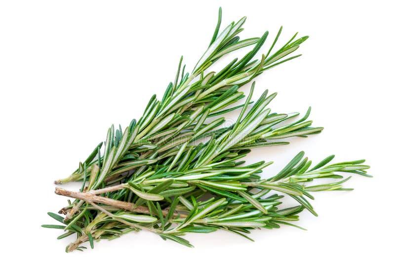 Getrenntes Rosmarinkraut Neues grünes Rosmarinbündel lokalisiert auf a stockbilder