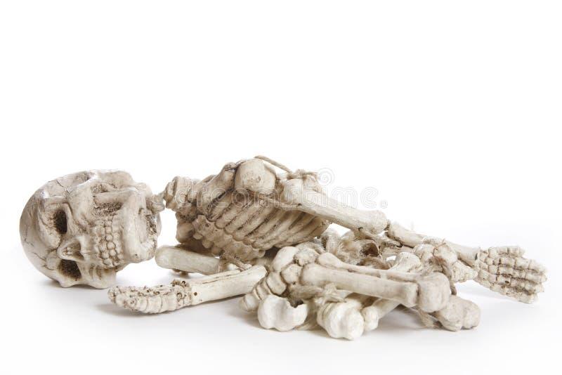 Getrenntes Skelett stockfotos