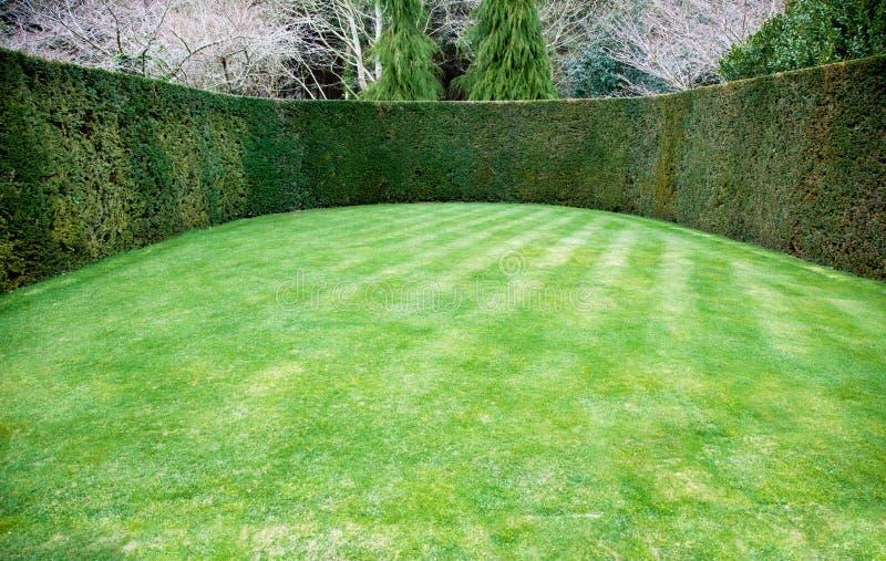 Getrimmte Hecke um ovalen Rasen stockbild