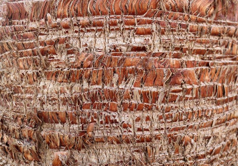 Getrimmter Stamm der Palme in Larnaka, Zypern lizenzfreie stockfotos