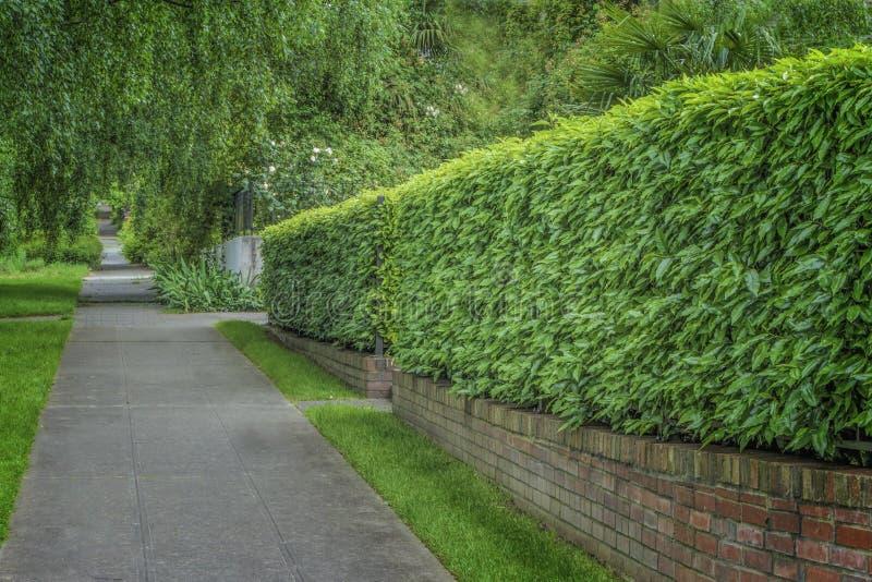 Getrimmtes klares Grün Hedgen stockbilder