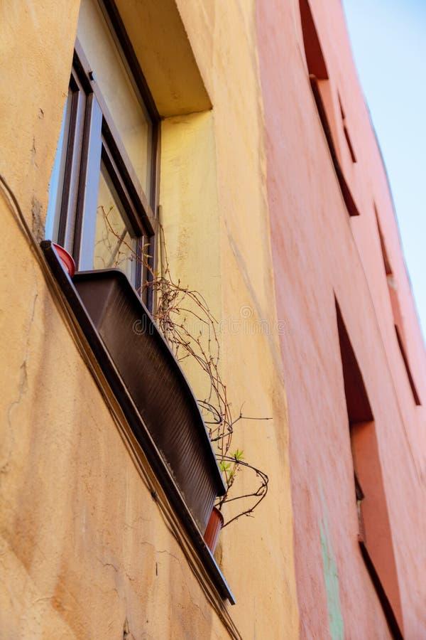 Getrocknete Anlagen auf dem Fensterbrett lizenzfreies stockbild