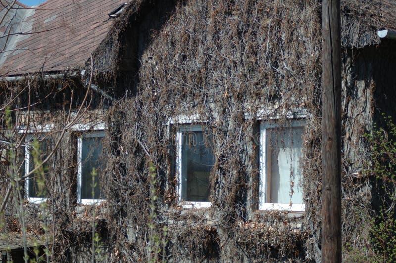 Getrocknete Anlagen auf der Wand des Hauses lizenzfreie stockfotos