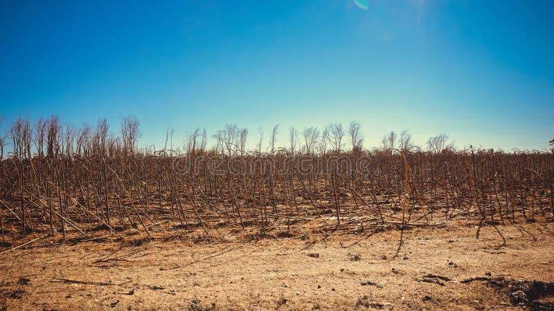 Getrocknete Anlagen in der Gobi-Wüste, China stockbild