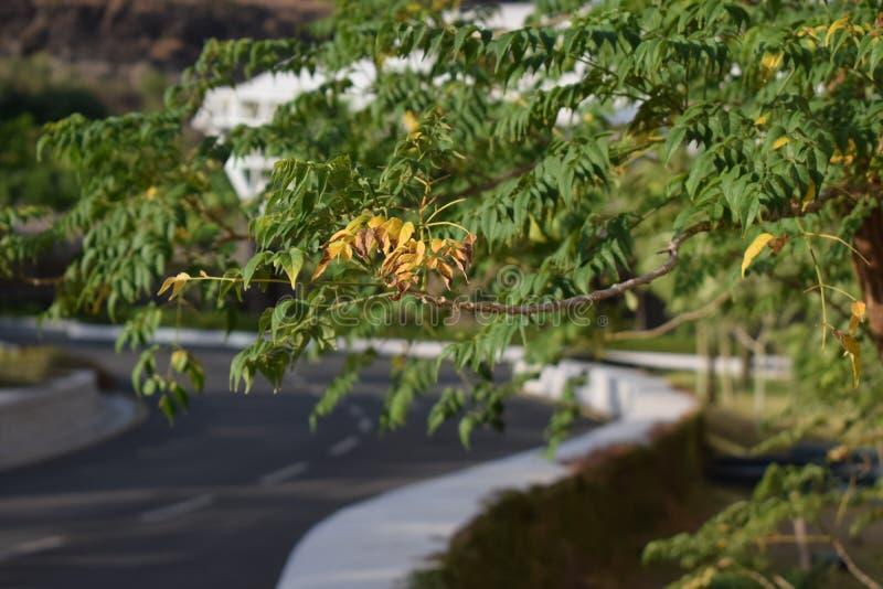Getrocknete Blätter stockfotografie