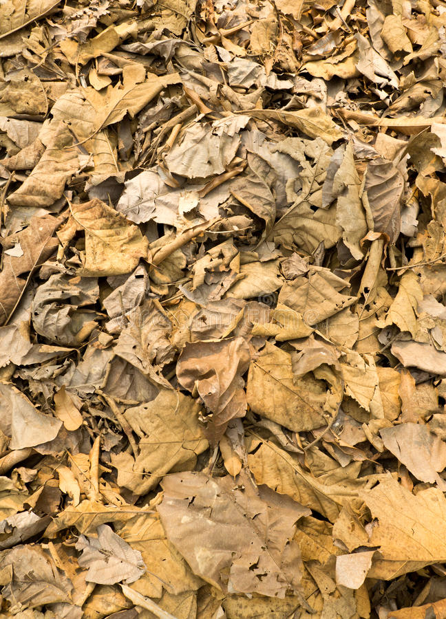 Getrocknete Blätter auf dem Boden lizenzfreie stockfotografie