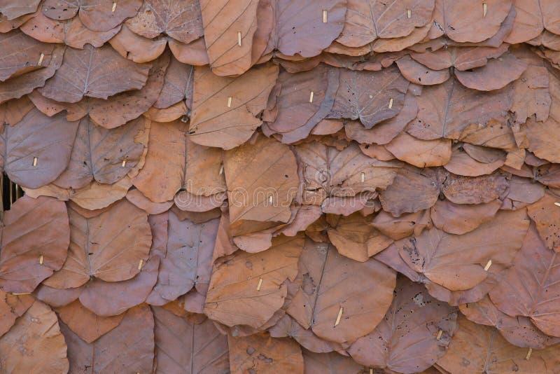 Getrocknete Blattwand- oder -dachbeschaffenheit lizenzfreie stockfotos