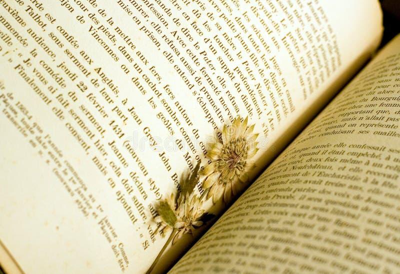 Getrocknete Blume benutzt als Bookmark stockfotografie
