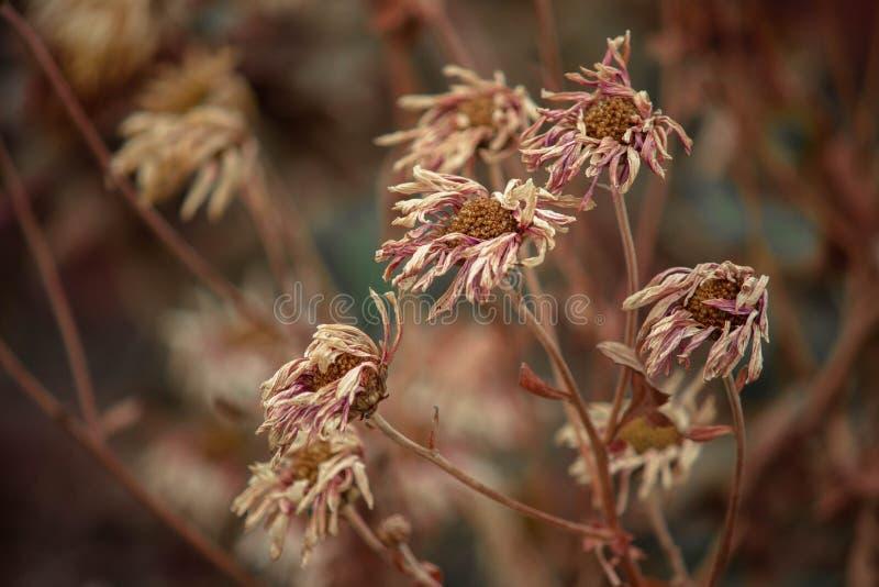 Getrocknete Blumen lizenzfreies stockfoto