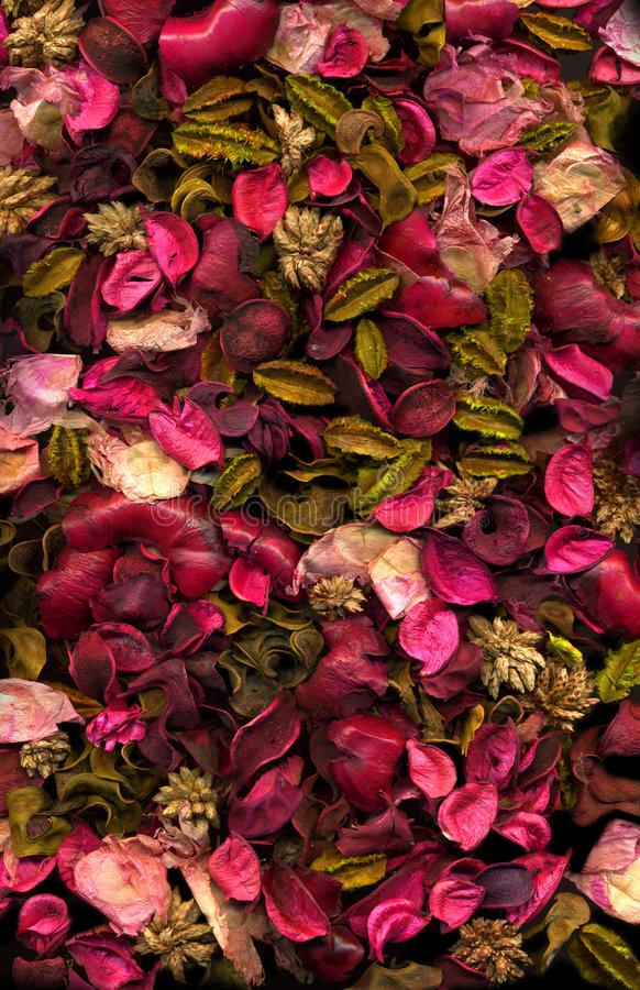 Getrocknete Blumen u. Blätter lizenzfreie stockfotografie
