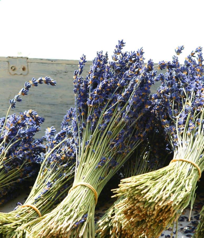 Getrocknete Blumensträuße des Lavendels stockfotos