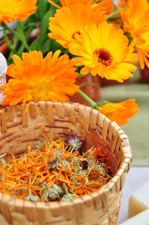 Getrocknete Calendulakräuter lizenzfreie stockbilder