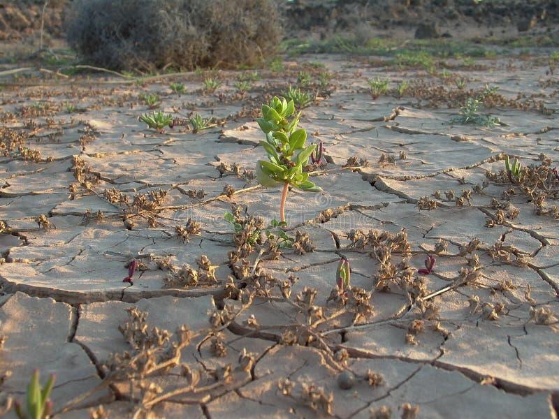 Getrocknete Erde in der Wüste lizenzfreie stockfotos