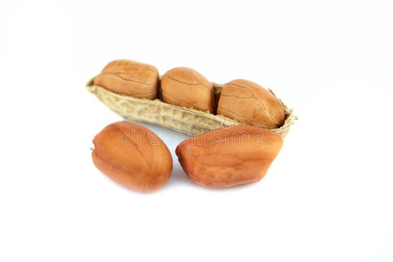 Getrocknete Erdnüsse auf dem weißen Hintergrund lizenzfreie stockbilder