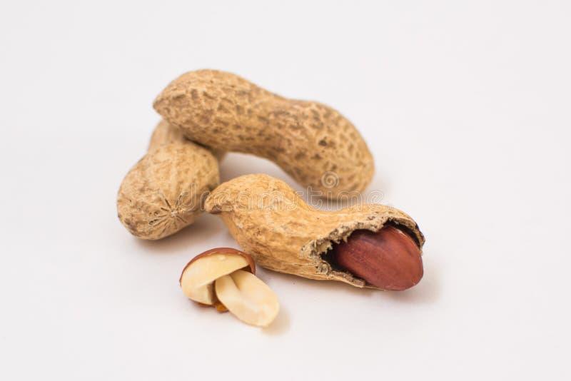 Getrocknete Erdnussnahaufnahme auf einem wei?en Hintergrund lizenzfreie stockbilder