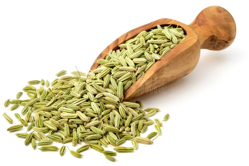 Getrocknete Fenchelsamen in der olivgrünen hölzernen Schaufel, lokalisiert auf Weiß lizenzfreies stockbild