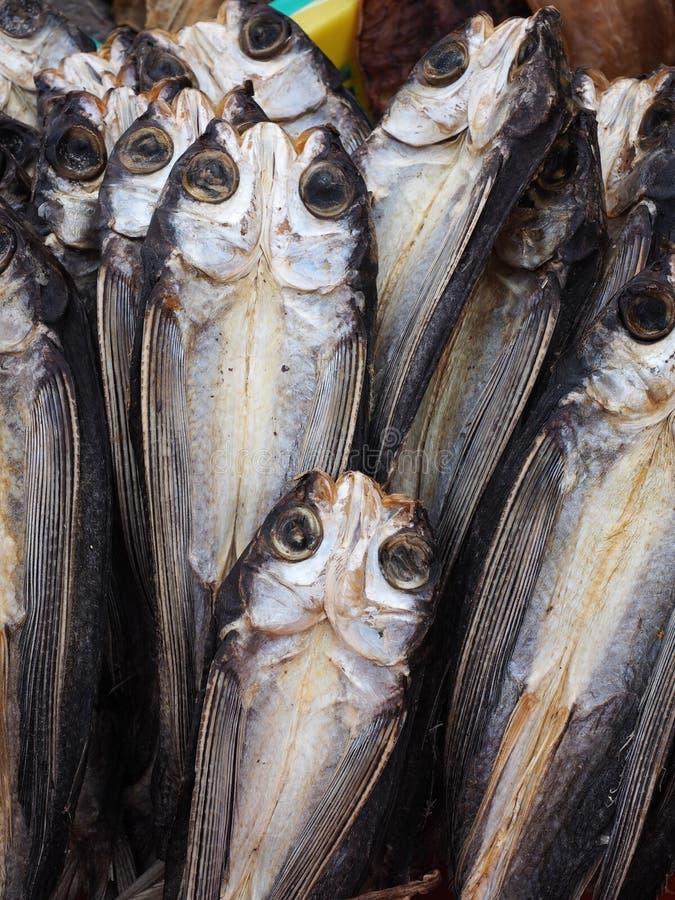 Getrocknete Fische stockfotografie