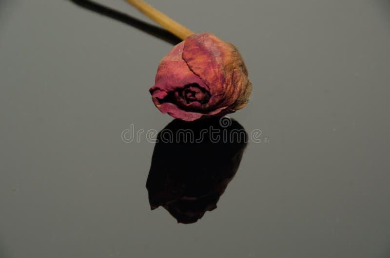 Getrocknete gelbe Rose auf einem reflektierenden schwarzen Blatt lizenzfreie stockfotografie