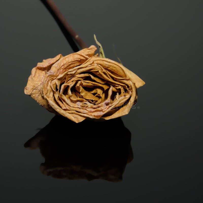Getrocknete gelbe Rose auf einem reflektierenden schwarzen Blatt stockbild