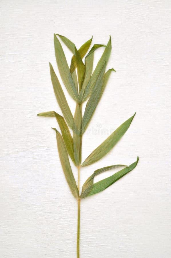Getrocknete Grünpflanze stockfoto