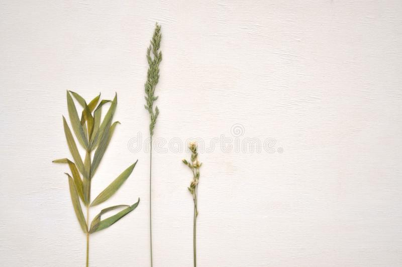 Getrocknete Grünpflanze lizenzfreie stockbilder