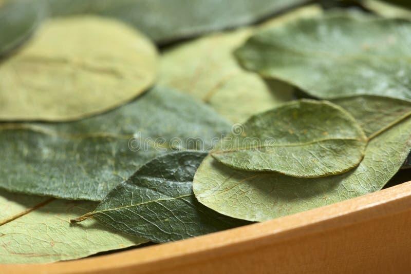 Getrocknete Koka-Blätter stockfotografie