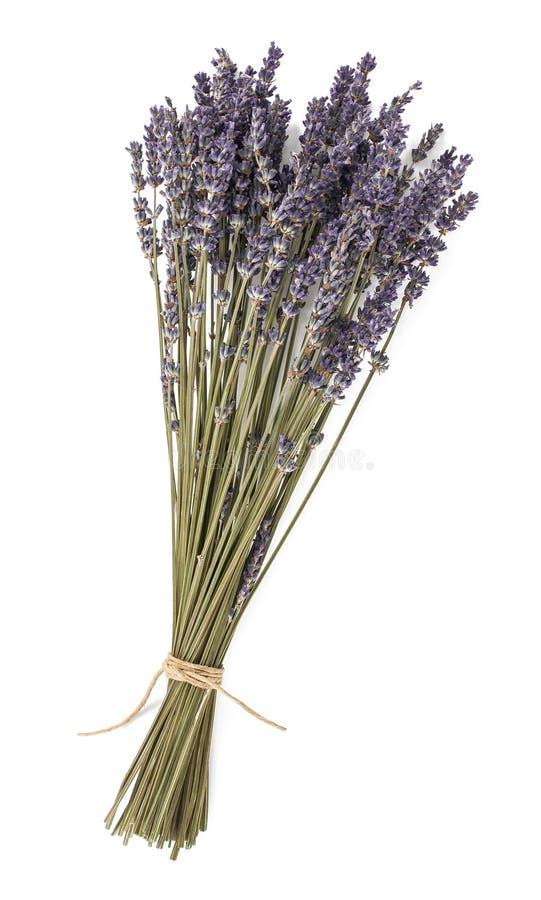 Getrocknete Lavendelblumen lizenzfreies stockfoto