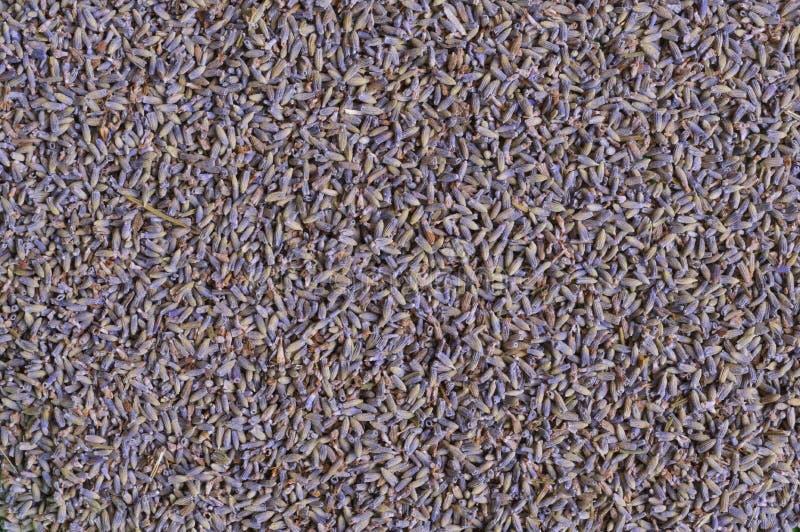 Getrocknete Lavendelblumenknospen lizenzfreies stockbild
