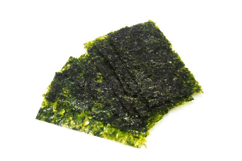 Getrocknete Meerespflanze lizenzfreie stockbilder