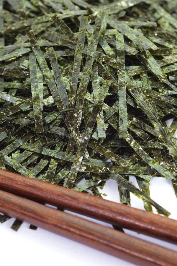 Getrocknete Meerespflanze stockbilder