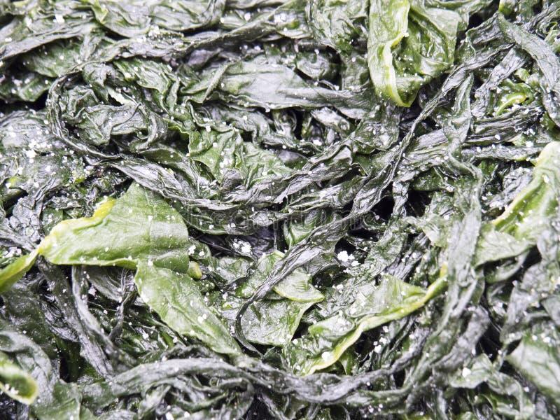 Getrocknete Meerespflanze, Japan stockfoto