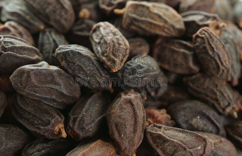 Getrocknete NEEM-Frucht mit SAMEN, NIMODI-Azadirachta Indica lizenzfreie stockfotografie