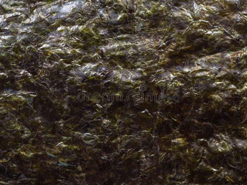 Getrocknete nori Meerespflanze stockfotografie