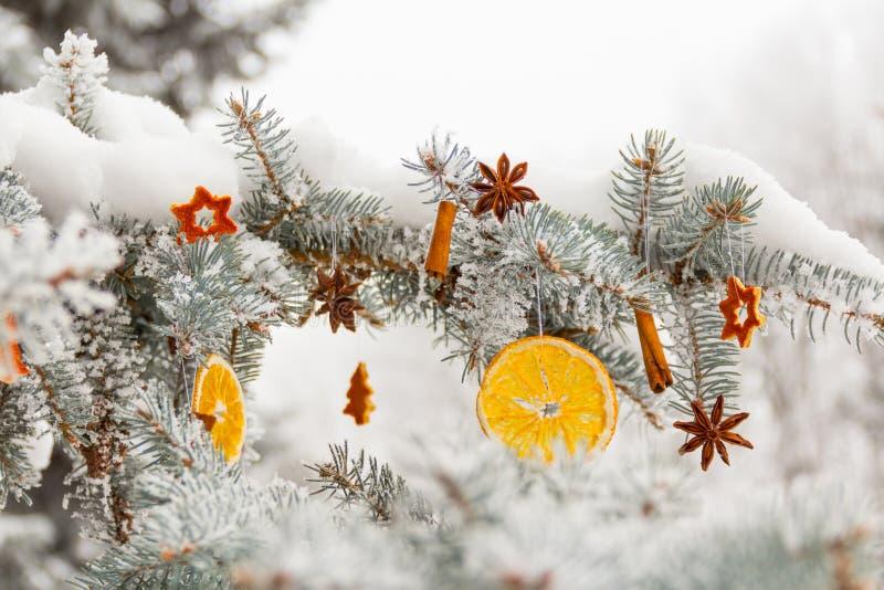 Getrocknete orange Scheiben, Sternanis, Zimtstangen auf schneebedeckter Kiefer b stockfotografie