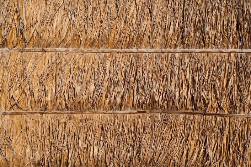 Getrocknete Palmblattwandbeschaffenheit stockbild