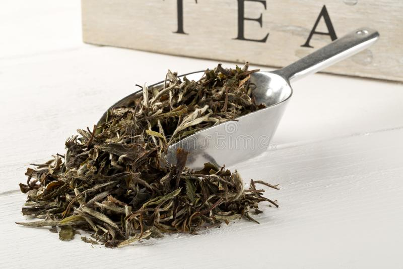 Getrocknete, rohe weiße Teeblätter in der Metallschaufel über weißem hölzernem Tabellenhintergrund lizenzfreies stockbild