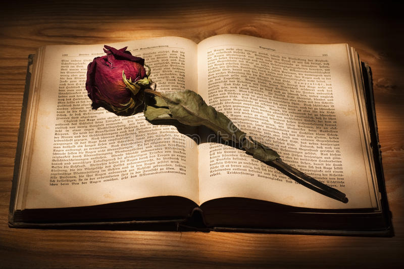 Getrocknete Rose und Buch stockbild