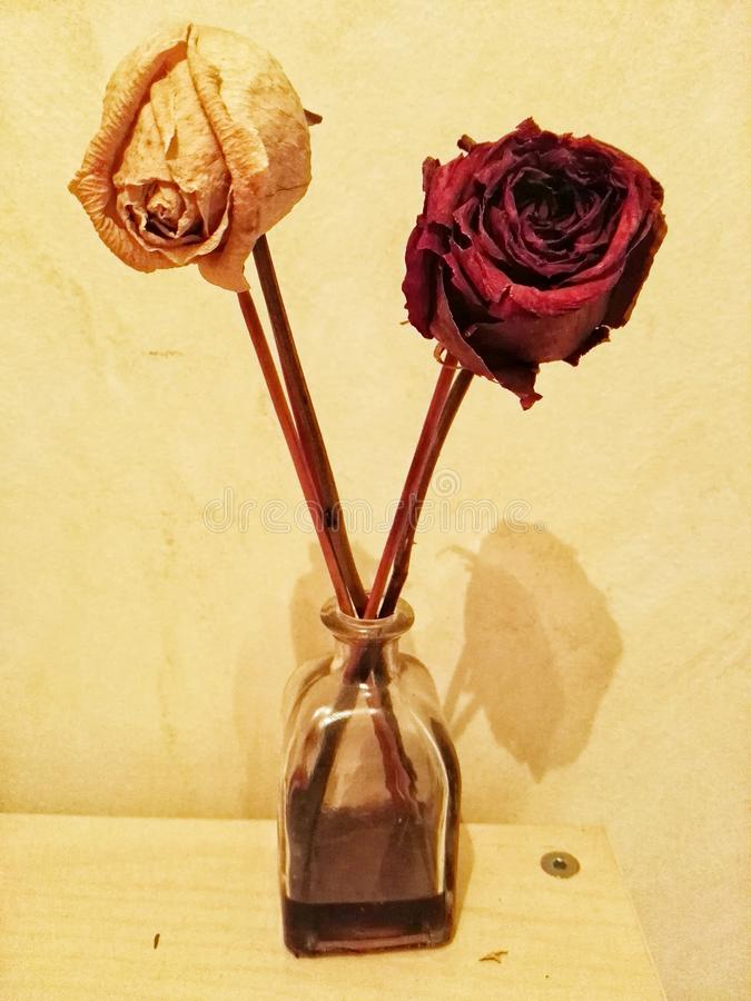 Getrocknete Rosen lizenzfreies stockfoto