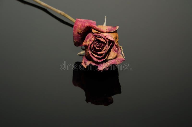 Getrocknete rote Rose auf einem reflektierenden schwarzen Blatt stockfotos