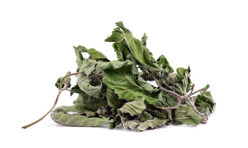 Getrocknete tadellose Blätter, lokalisiert auf weißem Hintergrund Getrockneter Pfefferminzstapel Medizinische Kr?uter lizenzfreie stockbilder